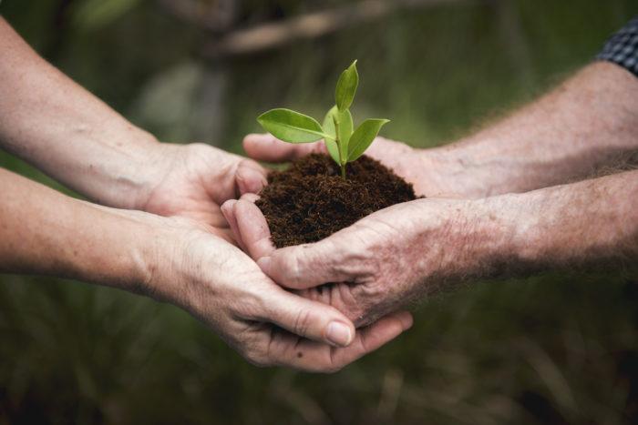 Wann gelten Unternehmen als grün?